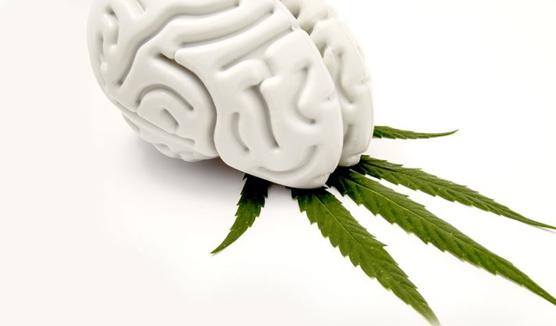 use-of-cannabis-effecting-the-brain